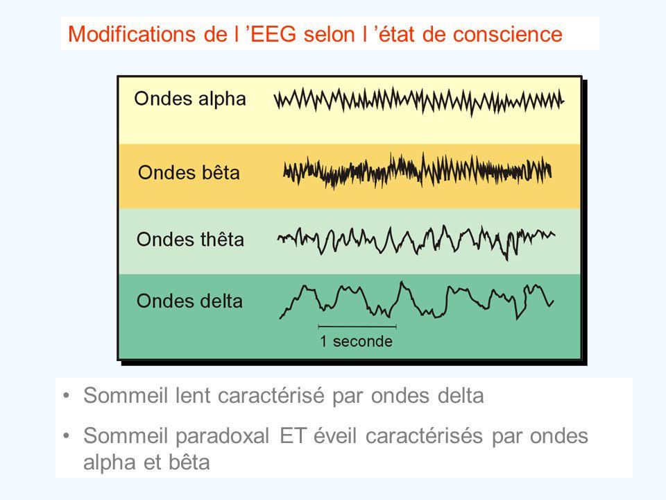 Modifications de l 'EEG selon l 'état de conscience •Sommeil lent caractérisé par ondes delta •Sommeil paradoxal ET éveil caractérisés par ondes alpha
