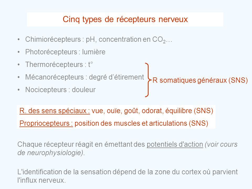Cinq types de récepteurs nerveux •Chimiorécepteurs : pH, concentration en CO 2 … •Photorécepteurs : lumière •Thermorécepteurs : t° •Mécanorécepteurs :