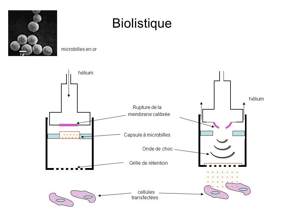 transfectées............................ Rupture de la hélium Onde de choc Biolistique …… membrane calibrée Capsule à microbilles Grille de rétention
