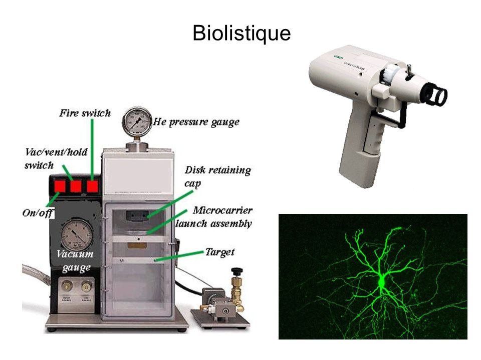 Biolistique
