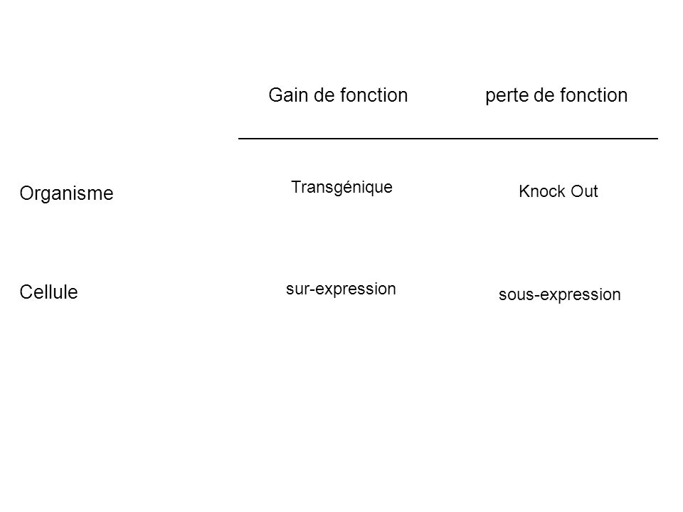 Gain de fonction Organisme Cellule perte de fonction sous-expression Knock Out sur-expression Transgénique