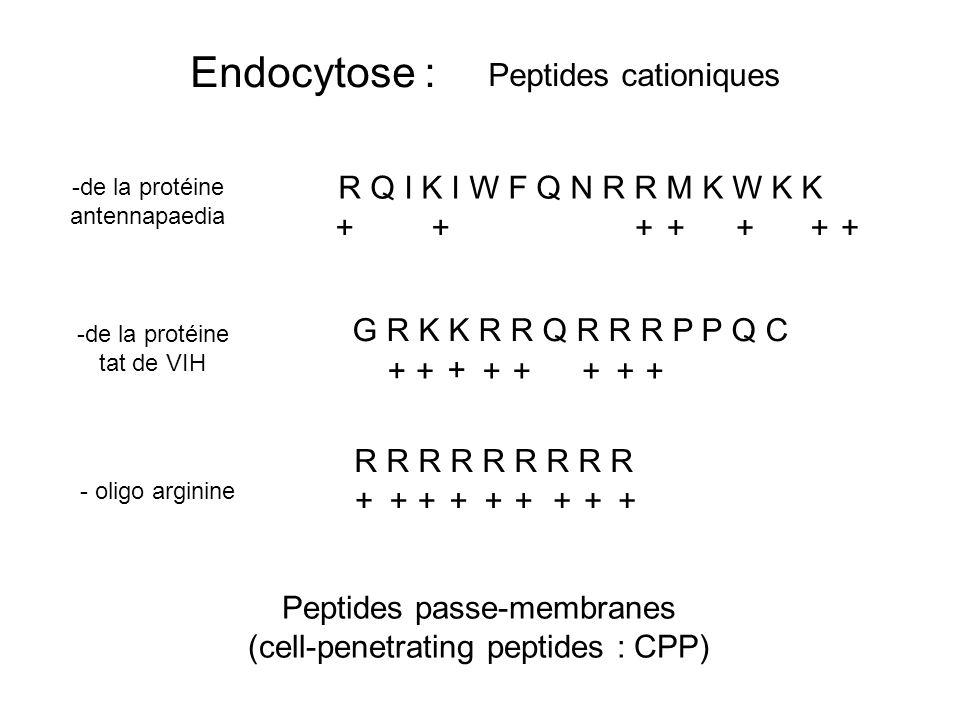 Peptides passe-membranes (cell-penetrating peptides : CPP) -de la protéine antennapaedia -de la protéine tat de VIH - oligo arginine R Q I K I W F Q N