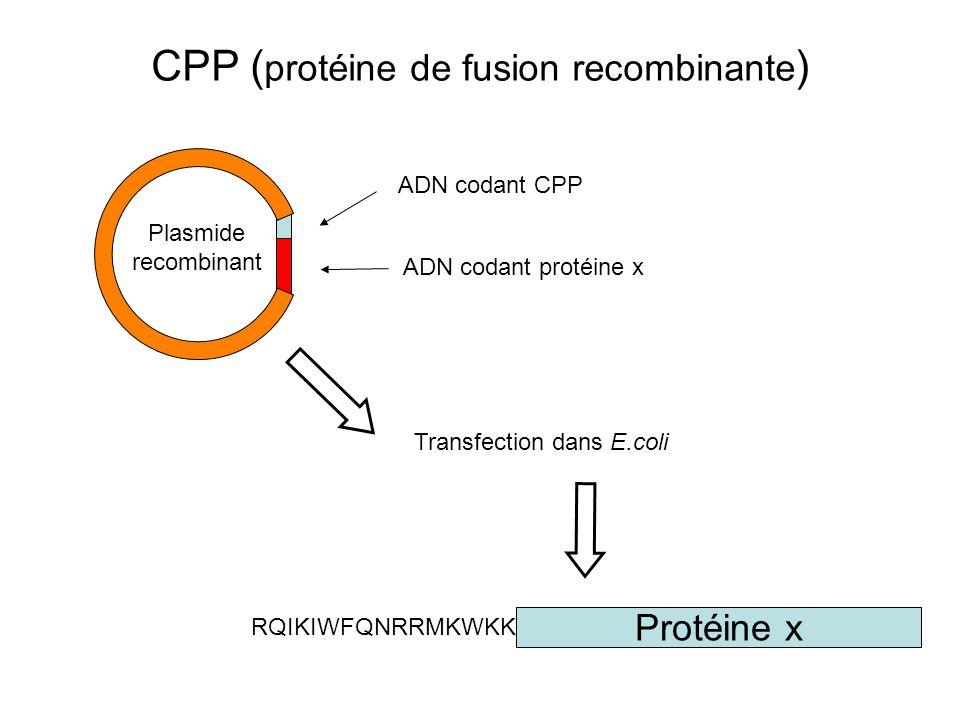 ADN codant protéine x ADN codant CPP Transfection dans E.coli RQIKIWFQNRRMKWKK- Protéine x Plasmide recombinant CPP ( protéine de fusion recombinante