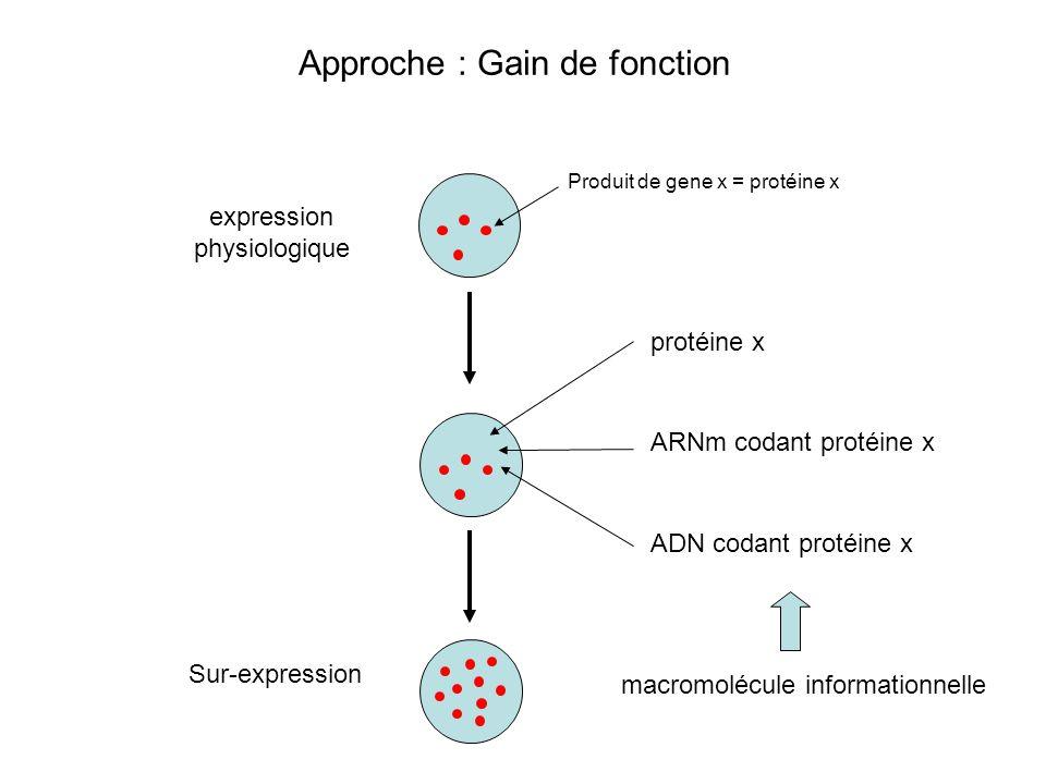 Sur-expression expression physiologique Produit de gene x = protéine x ARNm codant protéine x ADN codant protéine x Approche : Gain de fonction protéi