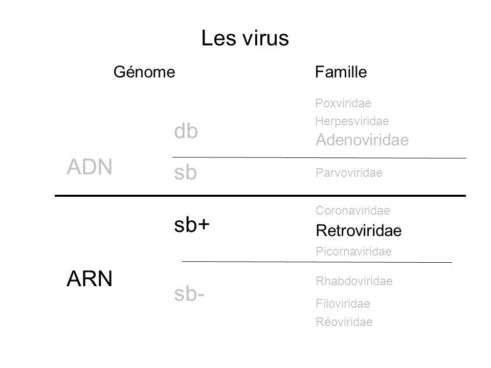 Les virus Génome ADN ARN db sb Famille sb+ sb- Poxviridae Herpesviridae Rhabdoviridae Coronaviridae Adenoviridae Picornaviridae Parvoviridae Filovirid