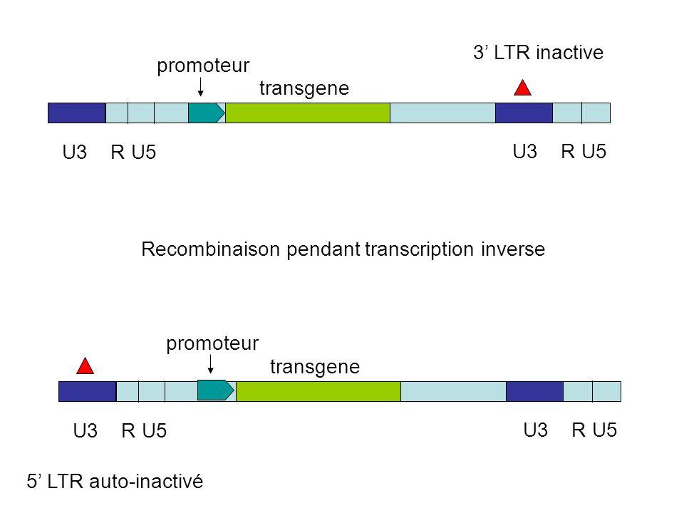 Recombinaison pendant transcription inverse U3RU5 U3RU5 transgene 3' LTR inactive U3RU5 U3RU5 transgene 5' LTR auto-inactivé promoteur
