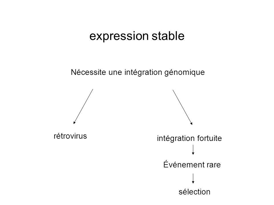 expression stable Nécessite une intégration génomique rétrovirus intégration fortuite Événement rare sélection