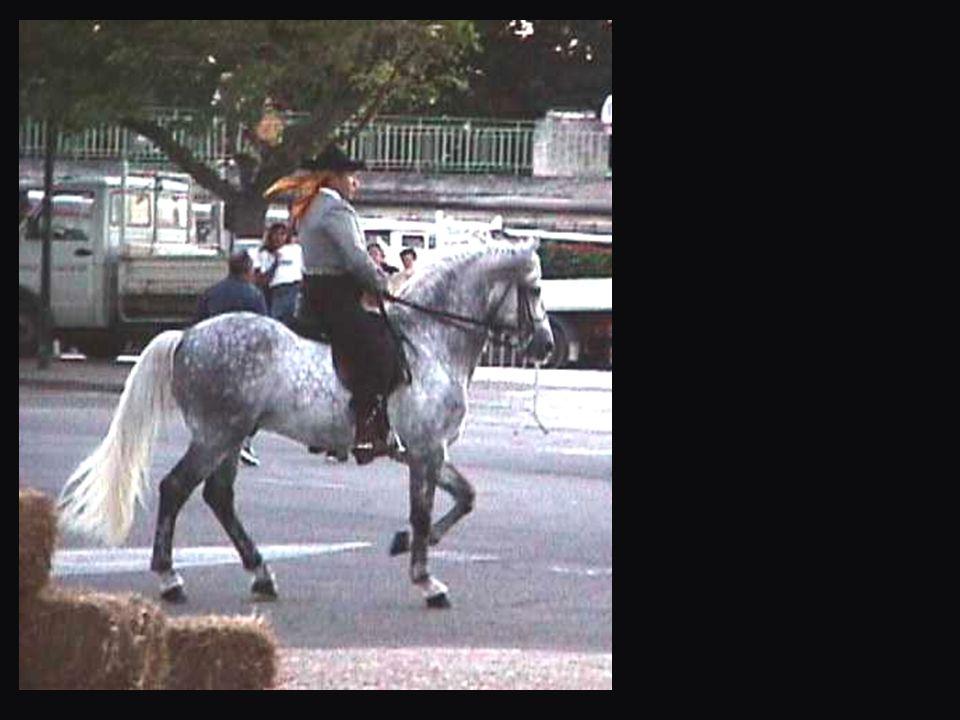 Piour une fois le midi du savoir-vivre est plus à Ottawa (Canada) qu'à La Roque: un règlement municipal y édicte que tout policier en vue doit garder le cheval par la bride pendant que son propriétaire fait les courses…
