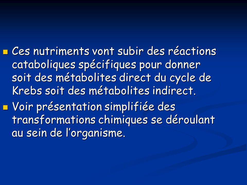  Ces nutriments vont subir des réactions cataboliques spécifiques pour donner soit des métabolites direct du cycle de Krebs soit des métabolites indi