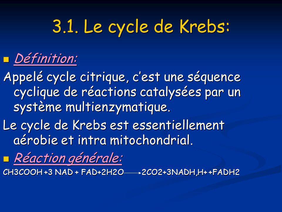 3.1. Le cycle de Krebs:  Définition: Appelé cycle citrique, c'est une séquence cyclique de réactions catalysées par un système multienzymatique. Le c