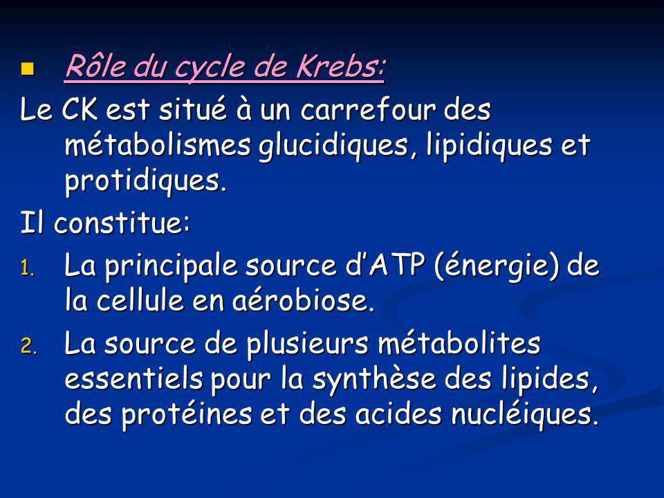  Rôle du cycle de Krebs: Le CK est situé à un carrefour des métabolismes glucidiques, lipidiques et protidiques. Il constitue: 1. La principale sourc