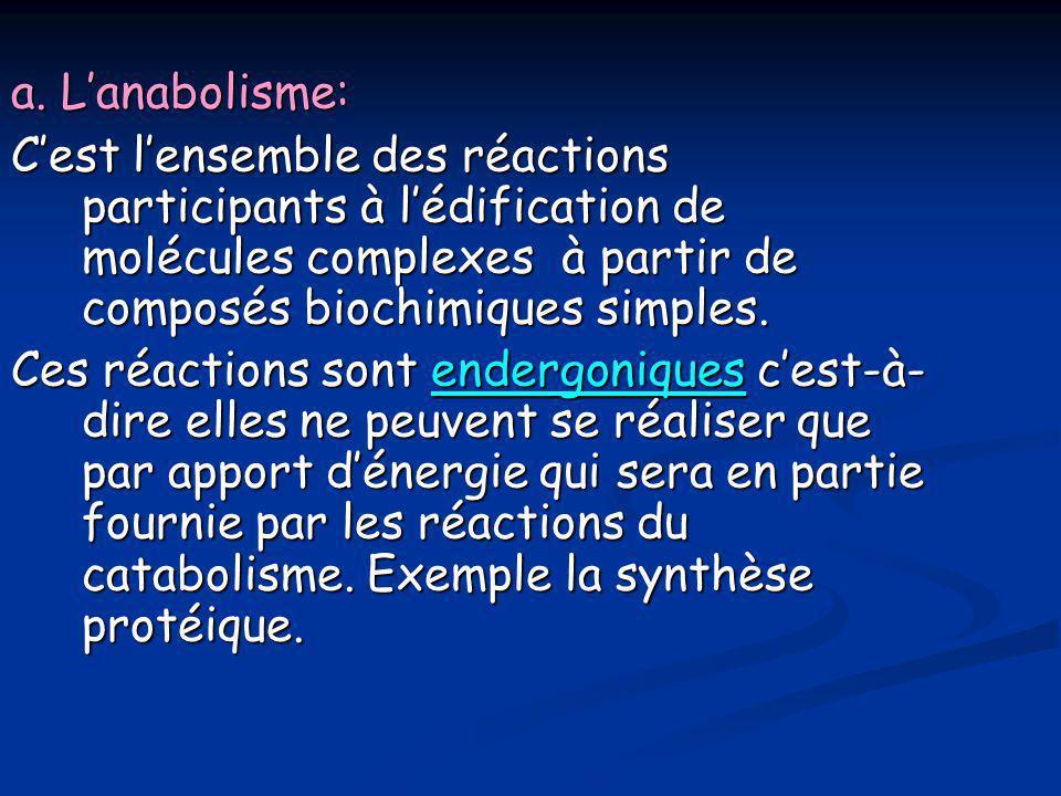 a. L'anabolisme: C'est l'ensemble des réactions participants à l'édification de molécules complexes à partir de composés biochimiques simples. Ces réa