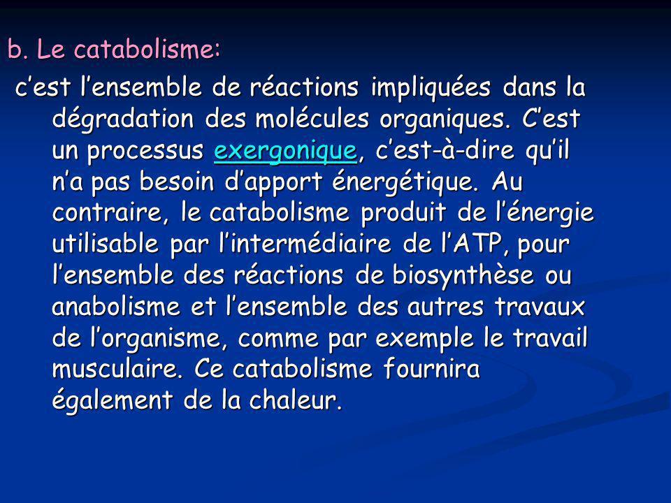 b. Le catabolisme: c'est l'ensemble de réactions impliquées dans la dégradation des molécules organiques. C'est un processus exergonique, c'est-à-dire