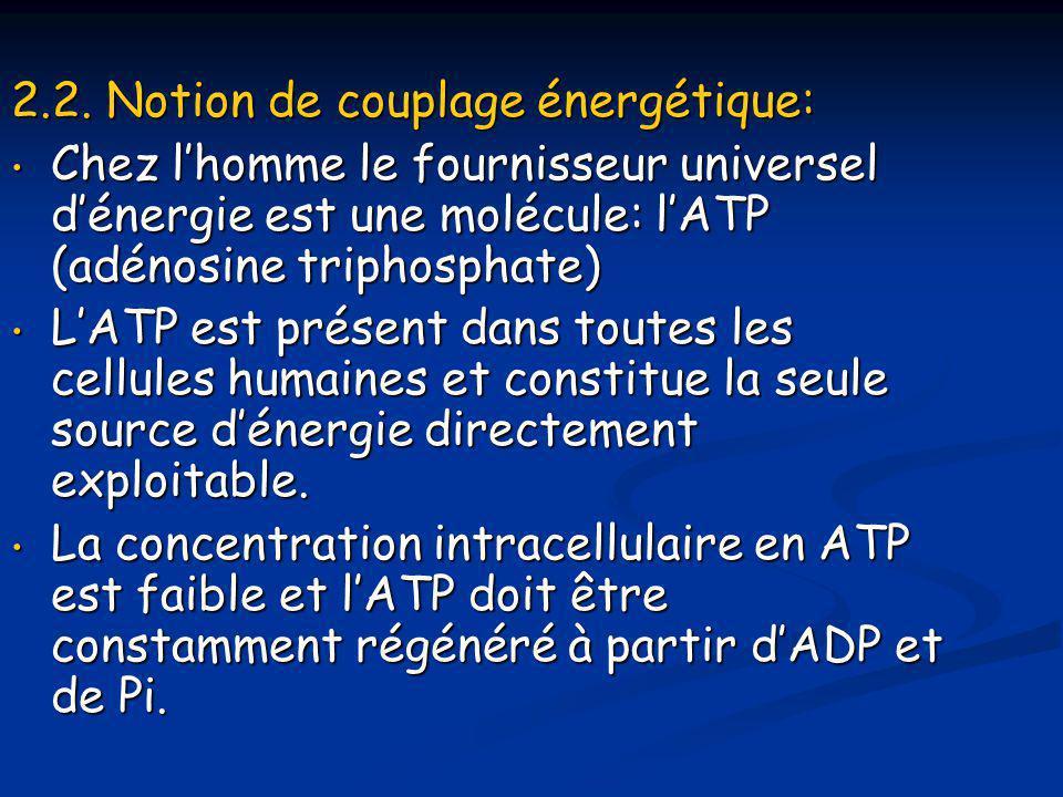 2.2. Notion de couplage énergétique: • Chez l'homme le fournisseur universel d'énergie est une molécule: l'ATP (adénosine triphosphate) • L'ATP est pr