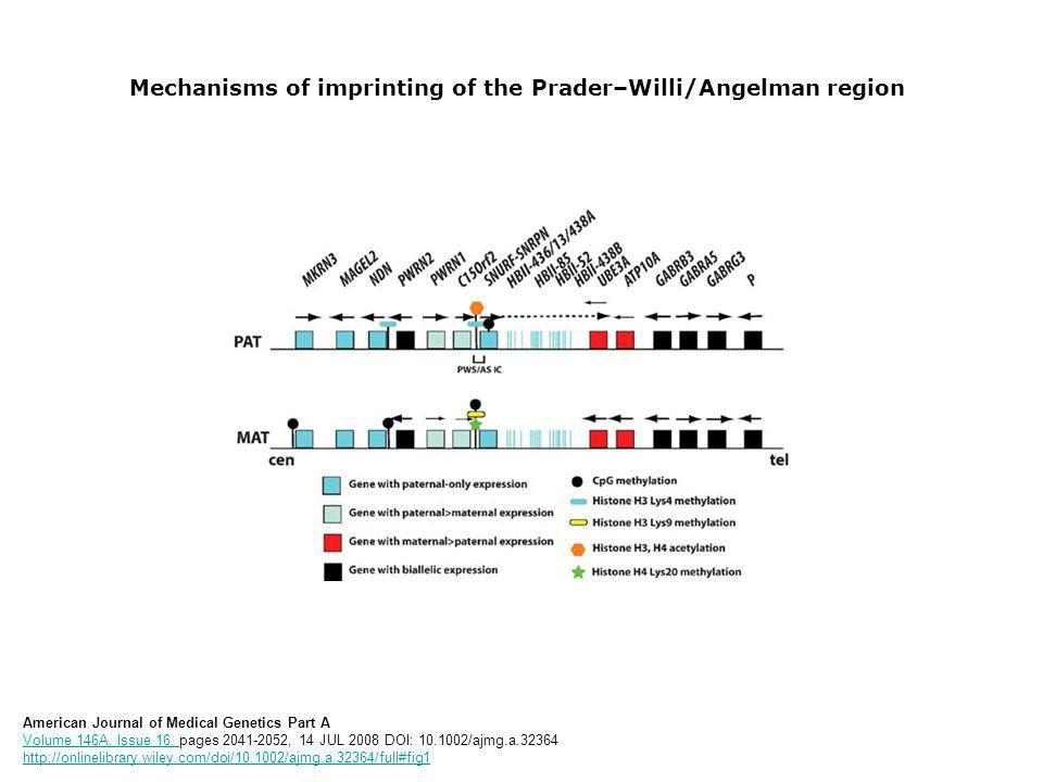 Mechanisms of imprinting of the Prader–Willi/Angelman region American Journal of Medical Genetics Part A Volume 146A, Issue 16, pages 2041-2052, 14 JU