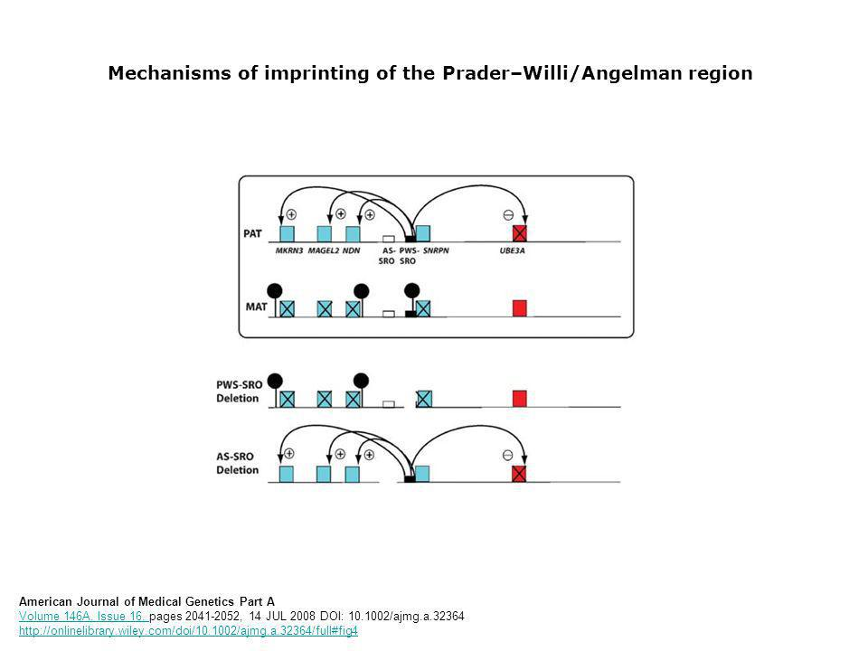 Mechanisms of imprinting of the Prader–Willi/Angelman region American Journal of Medical Genetics Part A Volume 146A, Issue 16, pages 2041-2052, 14 JUL 2008 DOI: 10.1002/ajmg.a.32364 http://onlinelibrary.wiley.com/doi/10.1002/ajmg.a.32364/full#fig4 Volume 146A, Issue 16, http://onlinelibrary.wiley.com/doi/10.1002/ajmg.a.32364/full#fig4