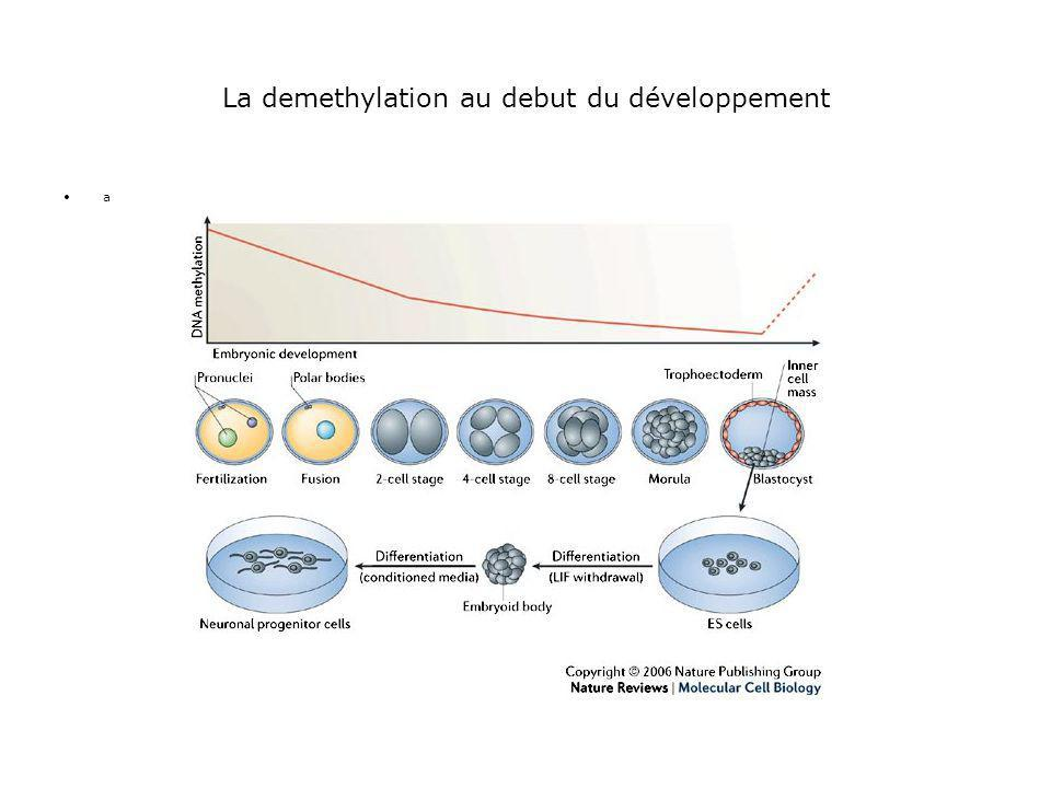 La demethylation au debut du développement •a•a