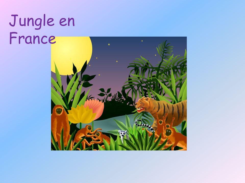Jungle en France
