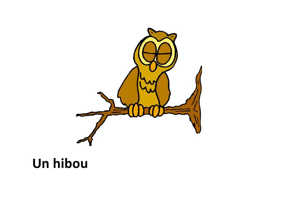 Un hibou