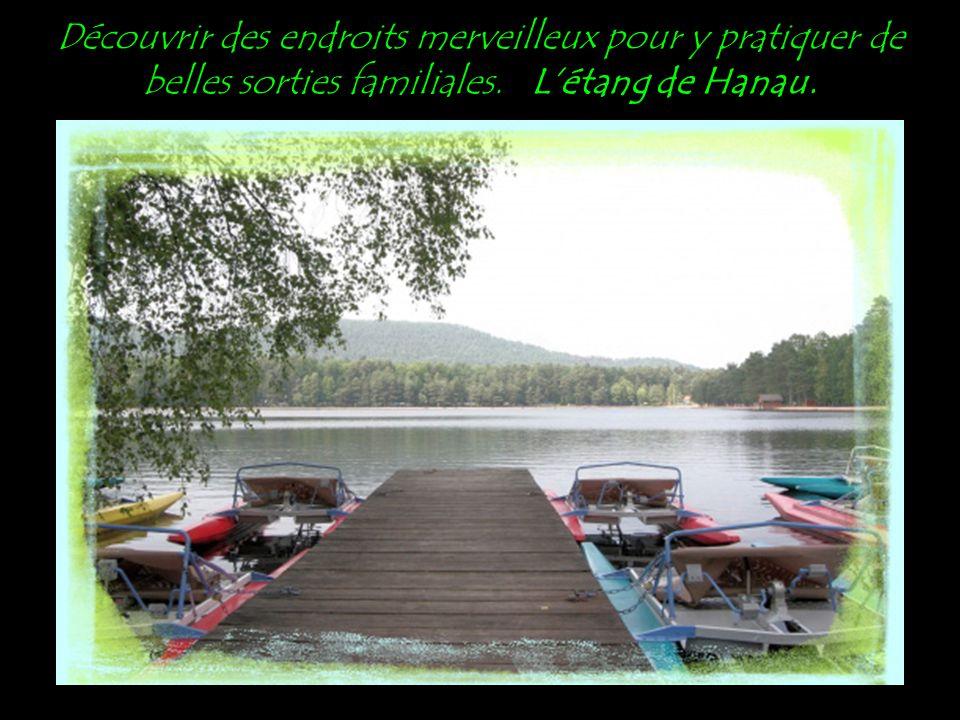 Cette région riche en ruisseaux, rivières, petits et grands plans d'eau. L'étang de Baerenthal.