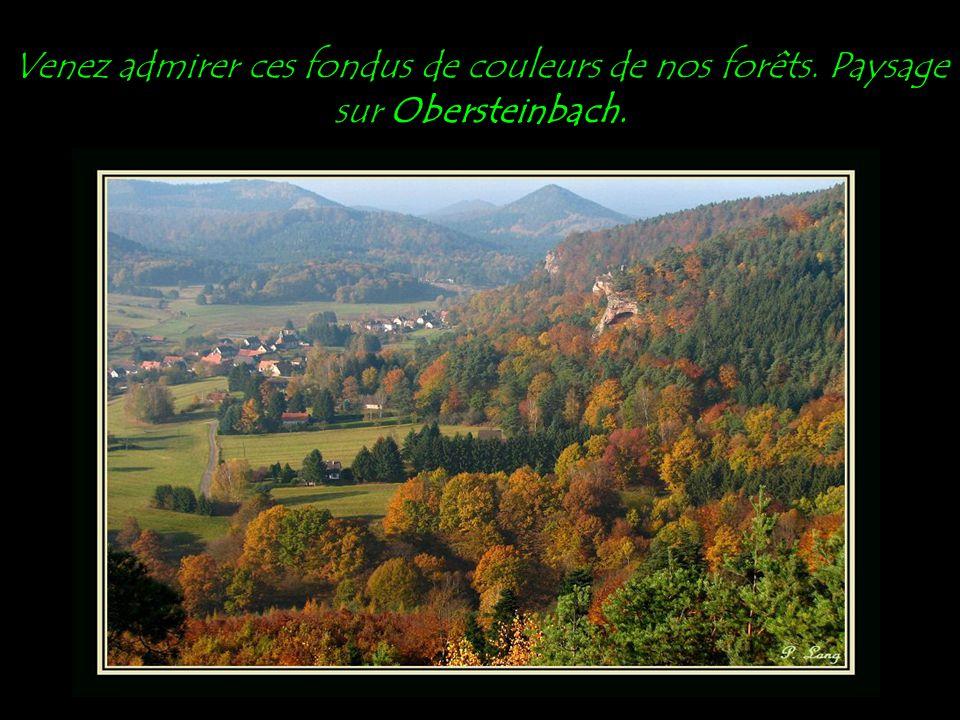 Venez admirer ces fondus de couleurs de nos forêts. Paysage sur Obersteinbach.