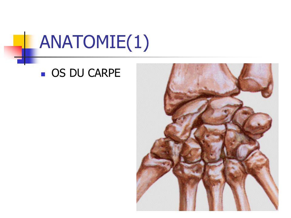 ANATOMIE(1) OS DU CARPE