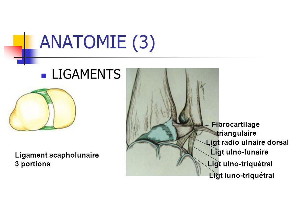 ANATOMIE (3) LIGAMENTS Fibrocartilage triangulaire Ligt ulno-lunaire Ligt ulno-triquétral Ligt luno-triquétral Ligt radio ulnaire dorsal Ligament scapholunaire 3 portions
