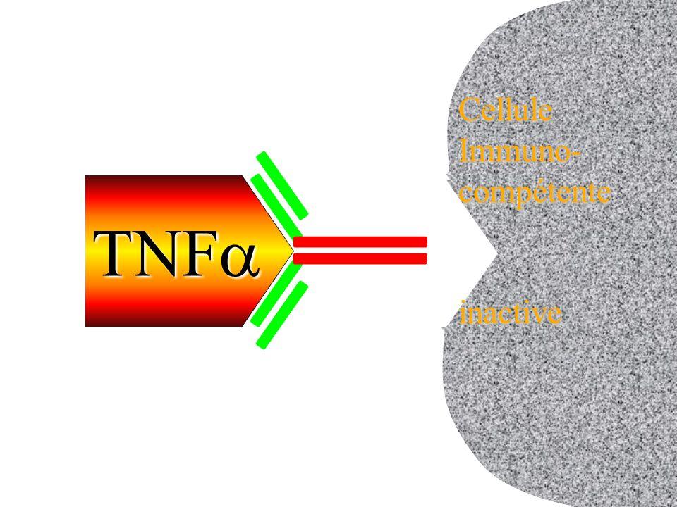 TNF  cellule inactive CelluleImmuno-compétenteinactive