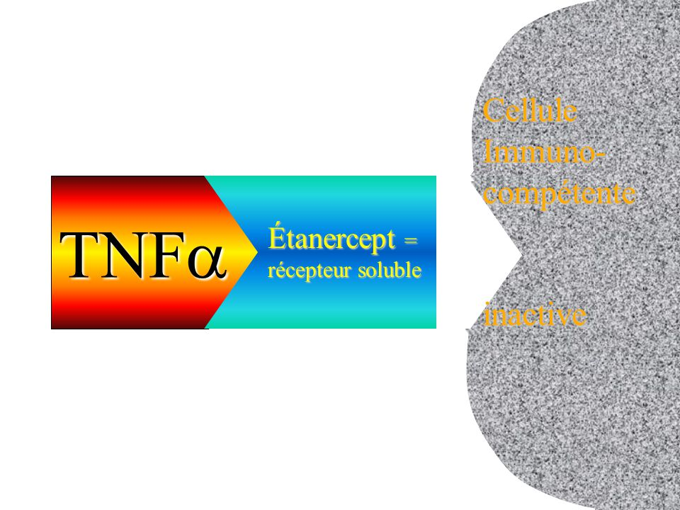 Étanercept = récepteur soluble cellule inactive CelluleImmuno-compétenteinactive