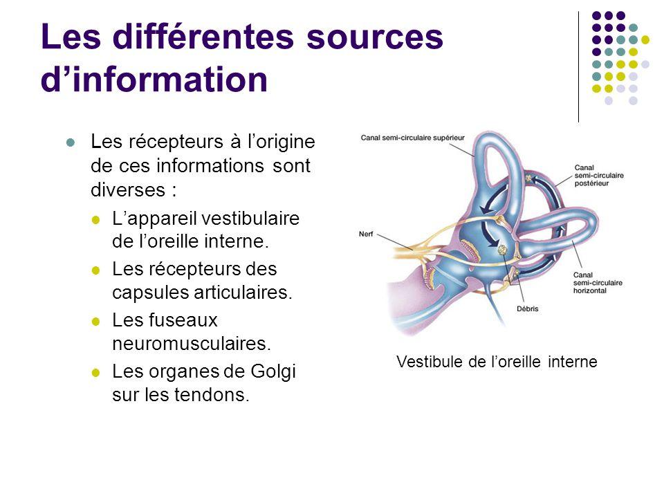 Les récepteurs à l'origine de ces informations sont diverses : L'appareil vestibulaire de l'oreille interne. Les récepteurs des capsules articulaires.