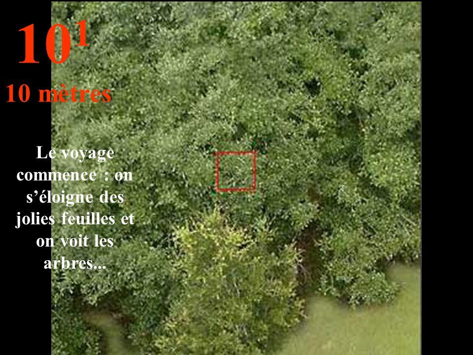 Le voyage commence : on s'éloigne des jolies feuilles et on voit les arbres... 10 1 10 mètres