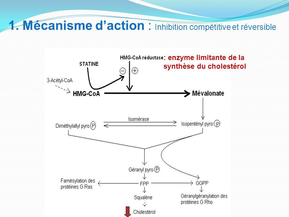 1. Mécanisme d'action : Inhibition compétitive et réversible : enzyme limitante de la synthèse du cholestérol