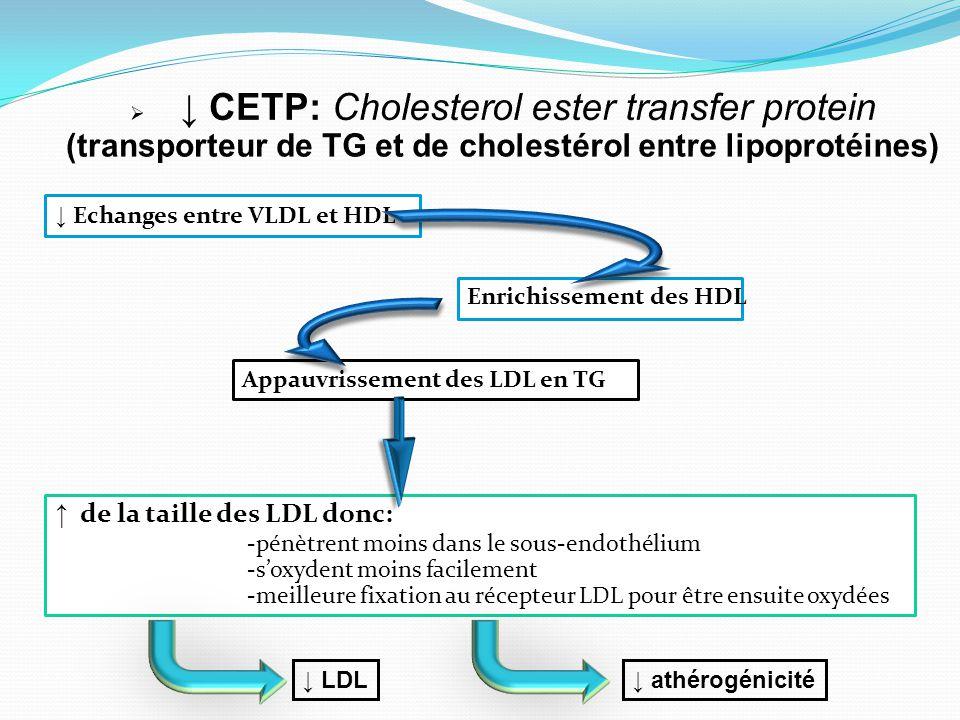 ↓ Echanges entre VLDL et HDL Enrichissement des HDL Appauvrissement des LDL en TG ↑ de la taille des LDL donc: -pénètrent moins dans le sous-endothéli
