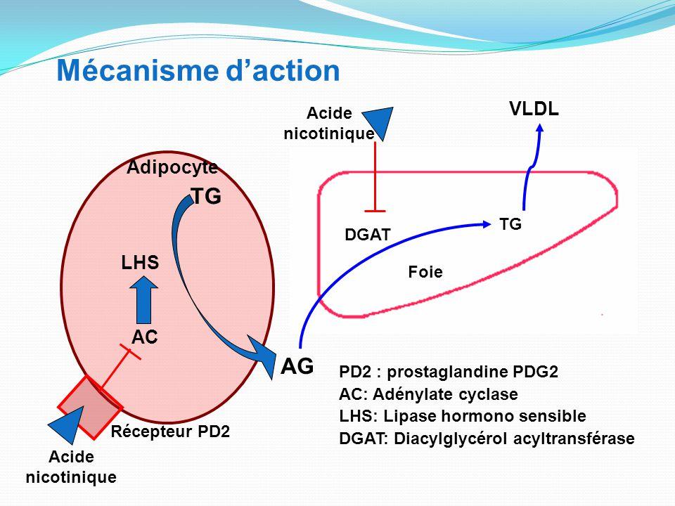 LHS TG AG VLDL Foie Mécanisme d'action AC TG Adipocyte DGAT Récepteur PD2 Acide nicotinique PD2 : prostaglandine PDG2 AC: Adénylate cyclase LHS: Lipase hormono sensible DGAT: Diacylglycérol acyltransférase