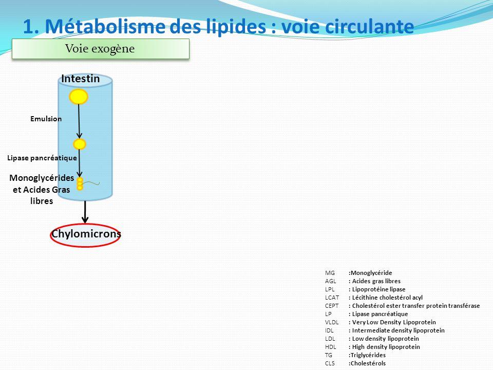 Voie exogène Monoglycérides et Acides Gras libres Lipase pancréatique Intestin Emulsion Chylomicrons :Monoglycéride : Acides gras libres : Lipoprotéin