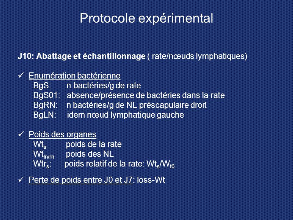 Protocole expérimental J10: Abattage et échantillonnage ( rate/nœuds lymphatiques) Enumération bactérienne BgS: n bactéries/g de rate BgS01: absence/p