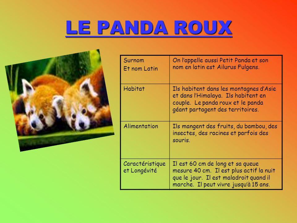 LE PANDA ROUX Surnom Et nom Latin On l'appelle aussi Petit Panda et son nom en latin est Ailurus Fulgens. HabitatIls habitent dans les montagnes d'Asi