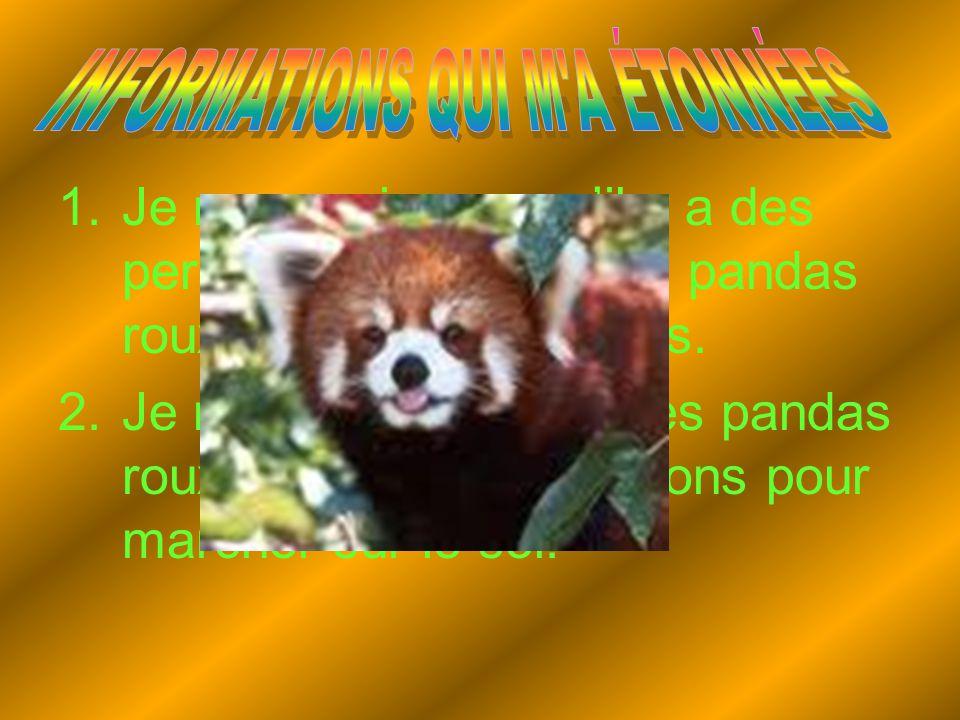 1.Je ne savais pas qu'il y a des personnes qui tuent les pandas roux pour faire des tapis. 2.Je ne savais pas que les pandas roux ne sont pas très bon