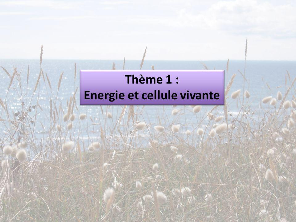 Thème 1 : Energie et cellule vivante Thème 1 : Energie et cellule vivante