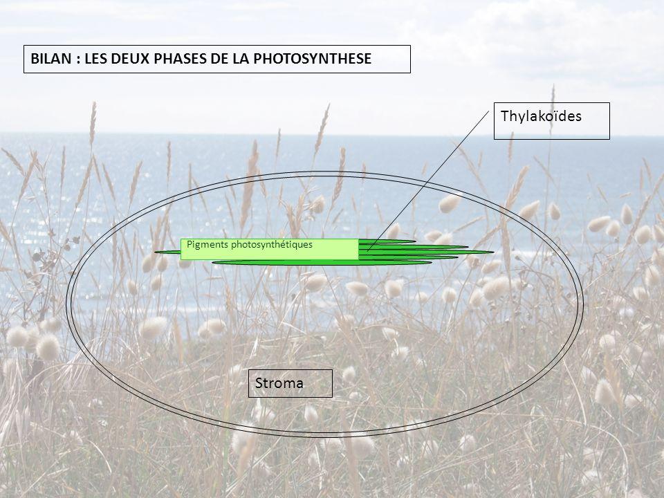 Thylakoïdes Stroma BILAN : LES DEUX PHASES DE LA PHOTOSYNTHESE Pigments photosynthétiques