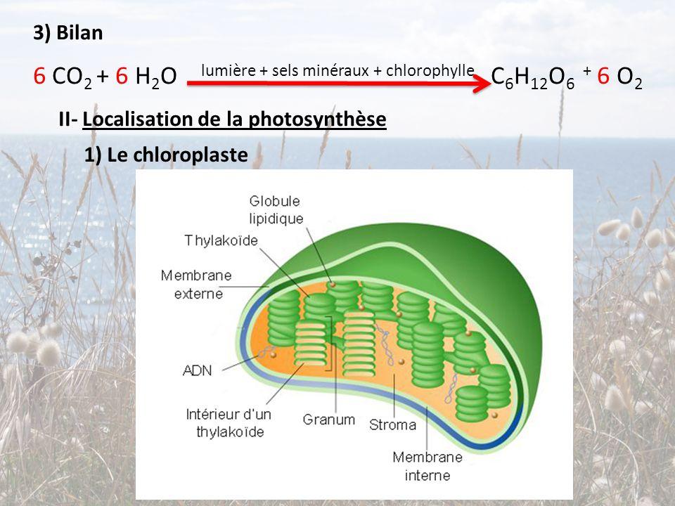 II- Localisation de la photosynthèse 3) Bilan 6 CO 2 + 6 H 2 O lumière + sels minéraux + chlorophylle C 6 H 12 O 6 + 6 O 2 1) Le chloroplaste