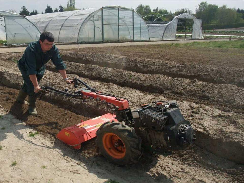Section horticulture Cours de travaux pratiques sur le site du cth