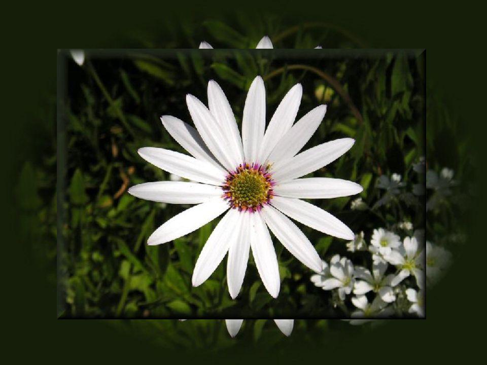 L amour de moi grandit comme une fleur qui s épanouit!