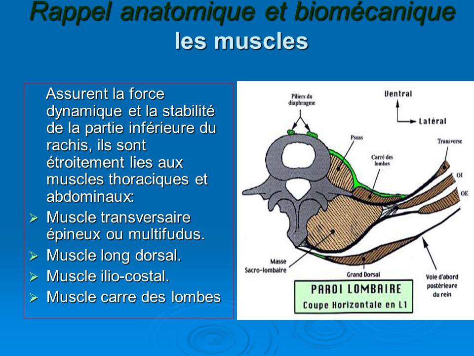 Rappel anatomique et biomécanique les muscles Assurent la force dynamique et la stabilité de la partie inférieure du rachis, ils sont étroitement lies aux muscles thoraciques et abdominaux: Assurent la force dynamique et la stabilité de la partie inférieure du rachis, ils sont étroitement lies aux muscles thoraciques et abdominaux:  Muscle transversaire épineux ou multifudus.