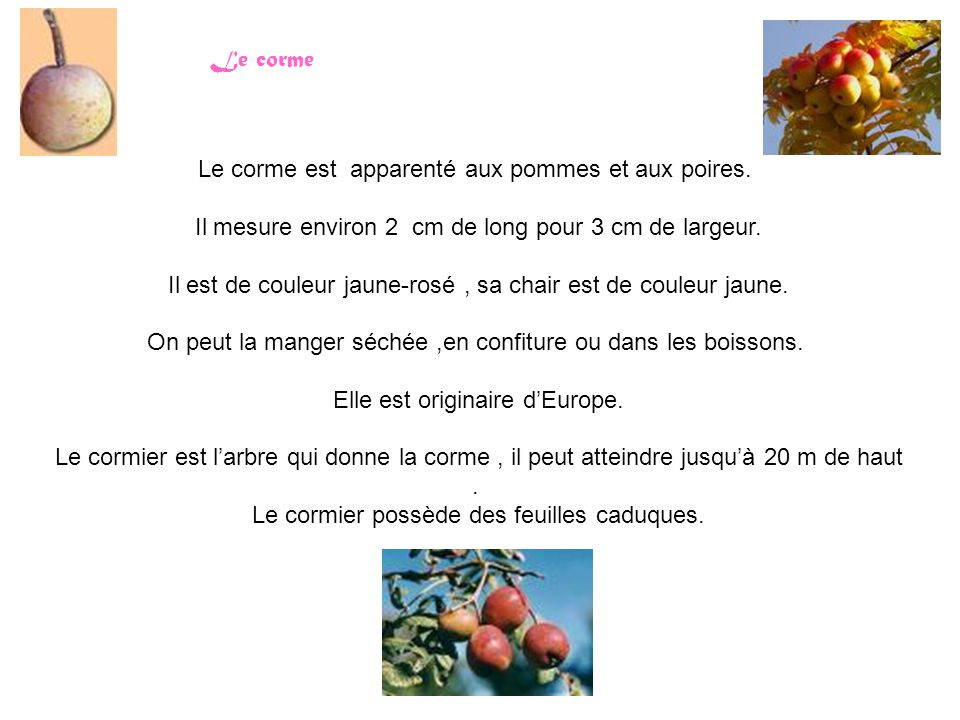 Le corme Le corme est apparenté aux pommes et aux poires. Il mesure environ 2 cm de long pour 3 cm de largeur. Il est de couleur jaune-rosé, sa chair