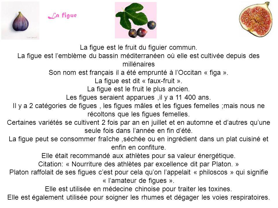La figue La figue est le fruit du figuier commun. La figue est l'emblème du bassin méditerranéen où elle est cultivée depuis des millénaires Son nom e