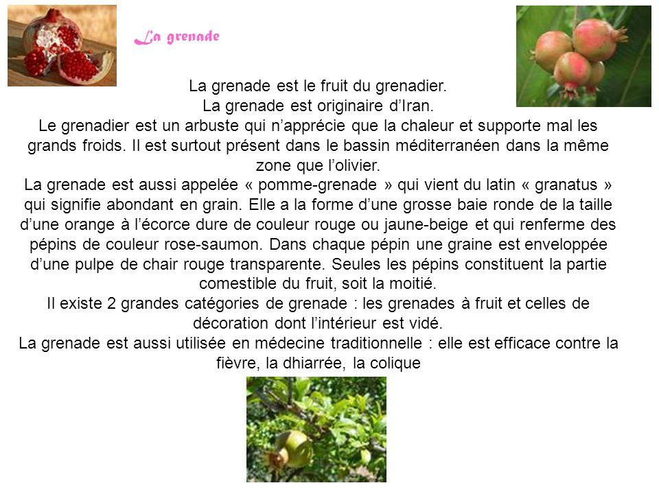 La grenade est le fruit du grenadier. La grenade est originaire d'Iran. Le grenadier est un arbuste qui n'apprécie que la chaleur et supporte mal les