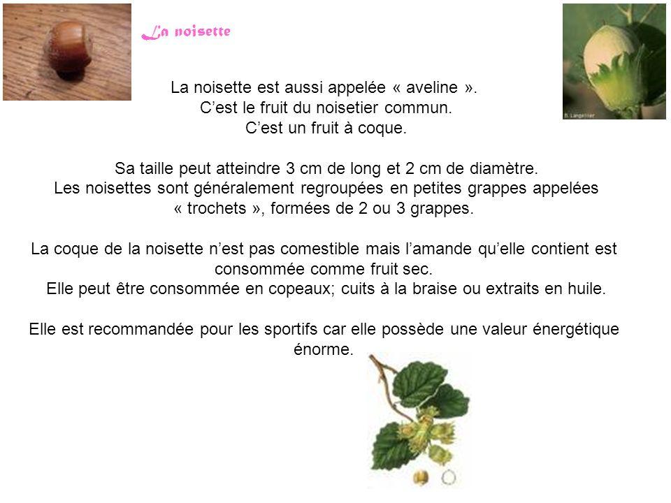 La noisette est aussi appelée « aveline ». C'est le fruit du noisetier commun. C'est un fruit à coque. Sa taille peut atteindre 3 cm de long et 2 cm d