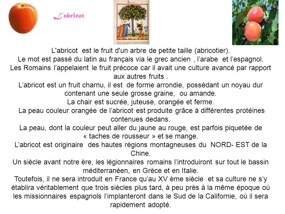 L'abricot est le fruit d'un arbre de petite taille (abricotier). Le mot est passé du latin au français via le grec ancien, l'arabe et l'espagnol. Les