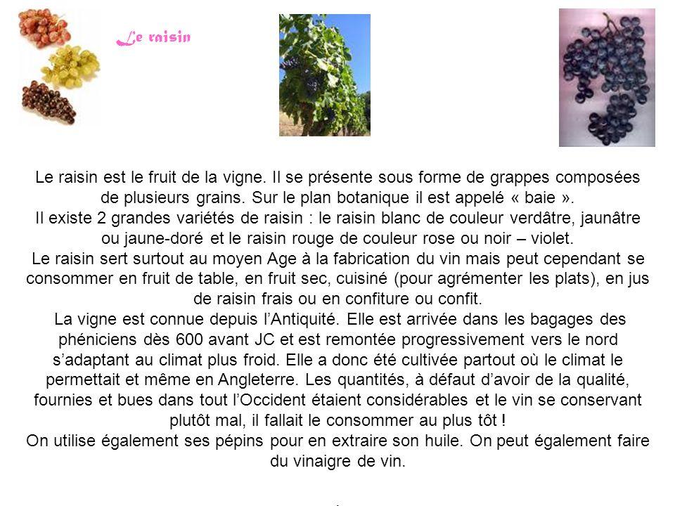 Le raisin est le fruit de la vigne.